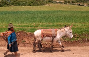 woman and donkey